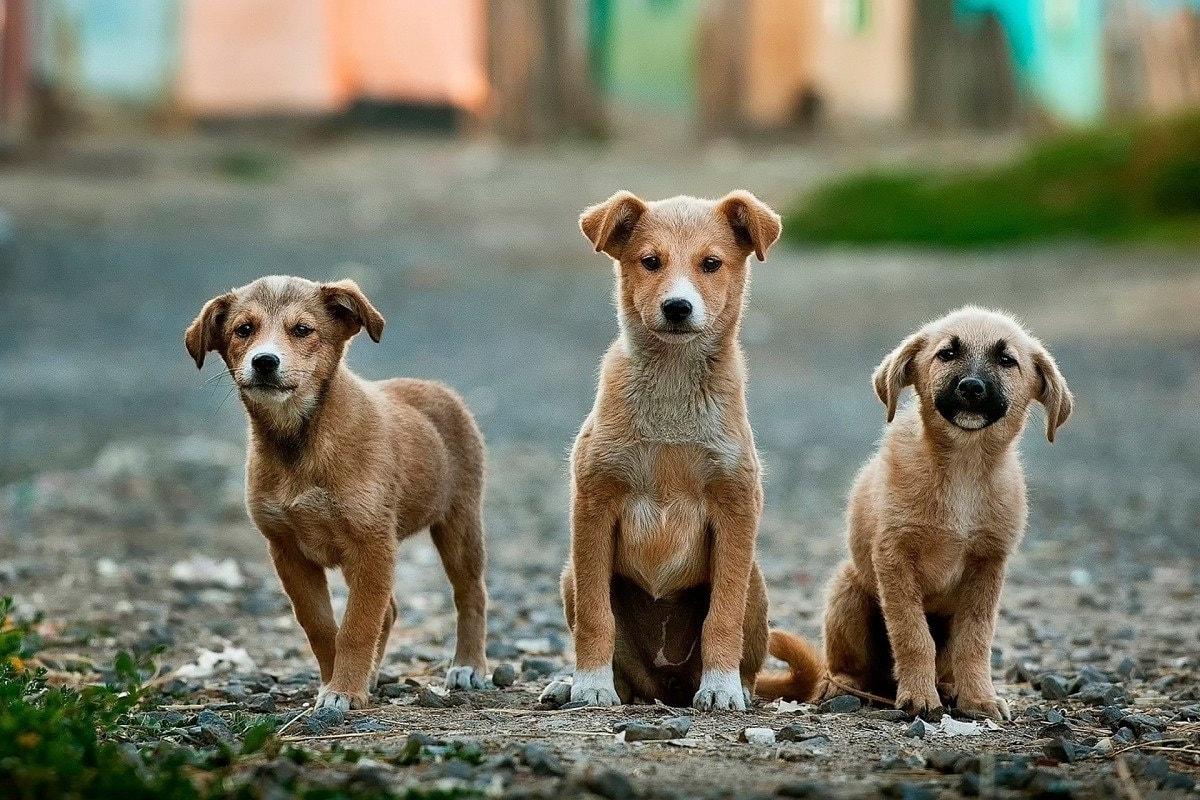 Famous Dog Breeds
