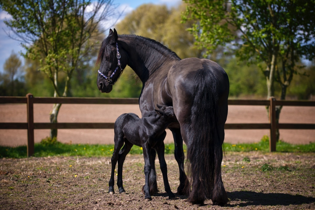Massage Your Horse