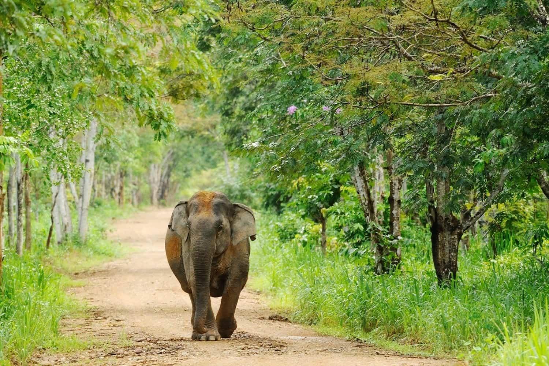 Wildlife Sanctuary Near Nainital